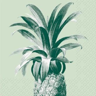 20 serv 33x33 cm Pina vert clair