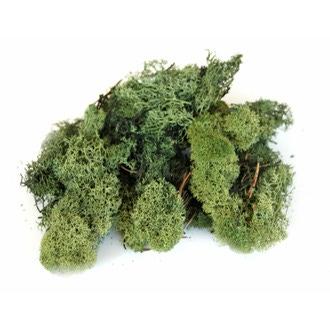 Mousse d'Islande décorative vert foncé 50g