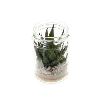 Succulente en pot verre 8,2x12,7cm
