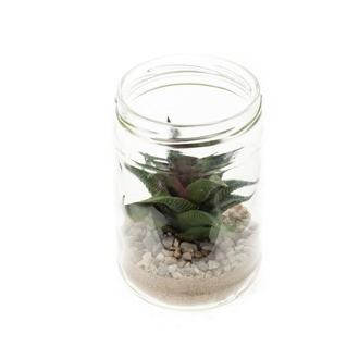 Echeveria setota en pot en verre 8cm