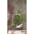 Terrarium coupe jarre en verre transparent Ø19xH25cm