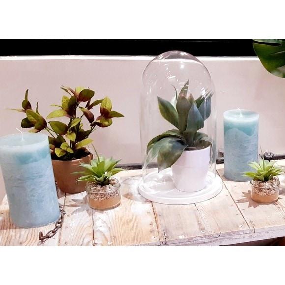 succulente en pot verre 8 2x6 4cm vert pas cher z dio. Black Bedroom Furniture Sets. Home Design Ideas