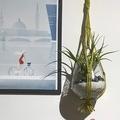 Sable décoratif blanc 750G