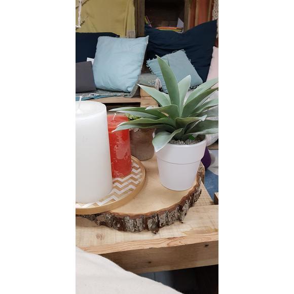 Plante pot agave h30cm
