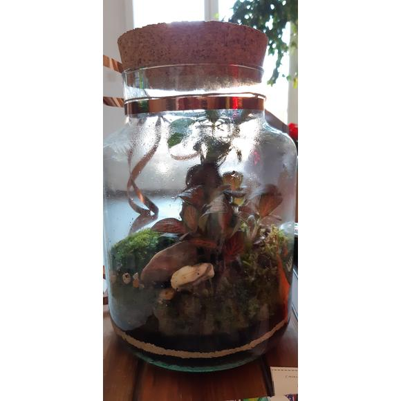 Terrarium bocal en verre avec bouchon en liège Chela 19x19cm