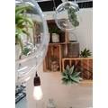 Pic agave 19cm vert