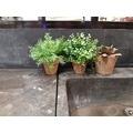 Eucalyptus artificiel en pot de terre cuite d9xh20cm