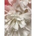 Papier crépon blanc 2,50x0,50m