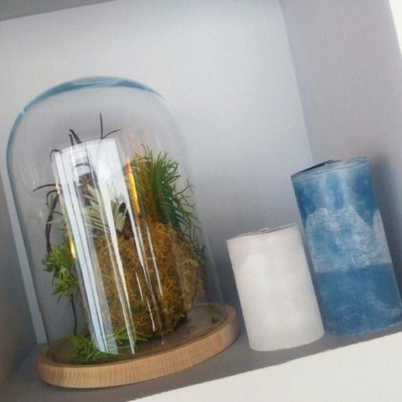 Achat en ligne Cloche en verre avec socle en bois brut Hella 23x17cm