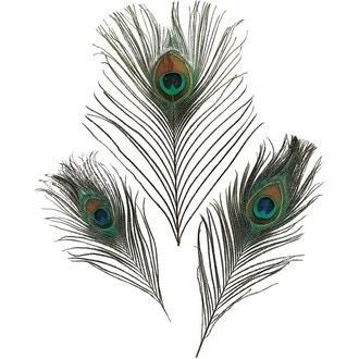 Set de 3 plumes de paon