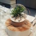 Coupe forme boule en verre + support bois 19x20,5cm