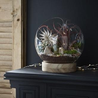 Coupe forme boule en verre transparente avec support en bois mauri 19x20,5cm