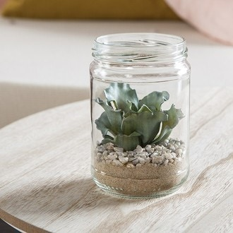 Echeveria rosea en pot en verre 8,2cm