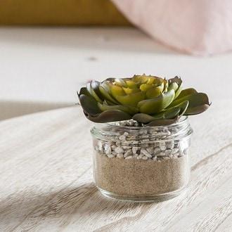 Echeveria en pot verre 8.2x6.4cm vert