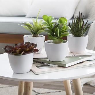 Succulente en pot blanc 10cm