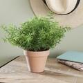 Asparagus artificiel en pot de terre cuite d9xh20cm