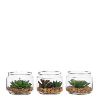 Succulente en pot vert h7xd9cm