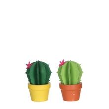 Achat en ligne Cactus vert h8xd5cm
