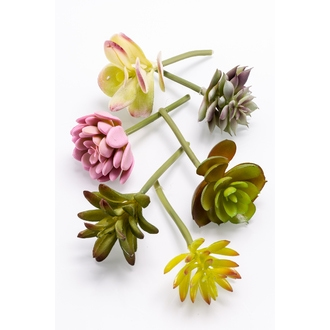 Assortiment de pic de succulentes vert et mauve par 6