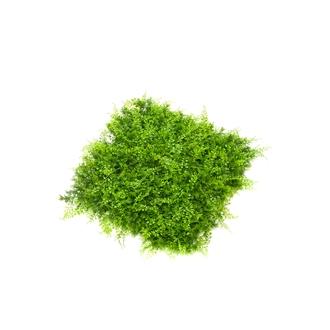 Carré d'herbe artificelle 50x50cm