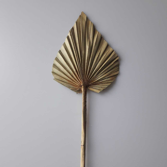 Feuille de palm spear naturel 60cm