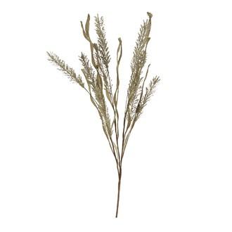 Fleurs séchées erica vertes 160xd5cm