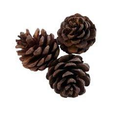 Achat en ligne Set de 6 pommes de pin naturel 3-5cm