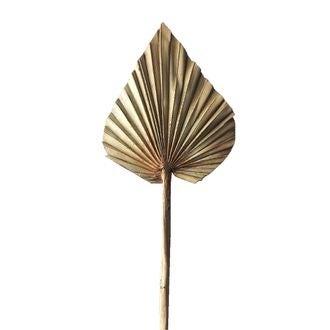 Feuille de palm spear naturel 60cm