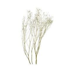 Achat en ligne Bouquet de fleurs séchées gypsum