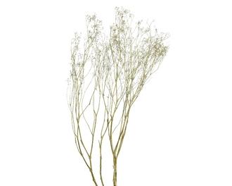 Bouquet de fleurs séchées gypsum