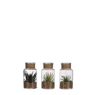 Mini succulente en verre h12x6cm