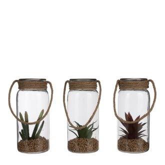 Succulente en verre h24,5x11cm