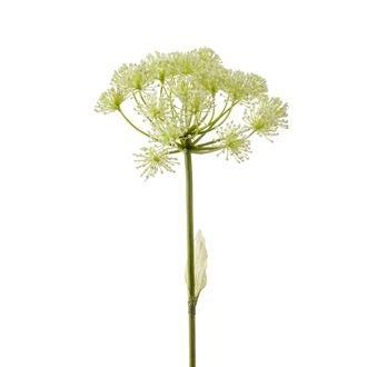 Branche d'heracleum blanche 78cm