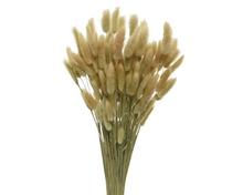 Achat en ligne Bouquet de fleurs séchées lagure ovale naturel 100g