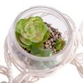 Succulente en pot verre d9cm et macramé