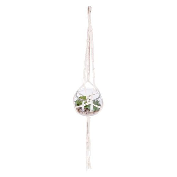 Achat en ligne Succulente en pot verre d9cm et macramé