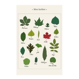 Affiche herbier k.marlier 30x40cm