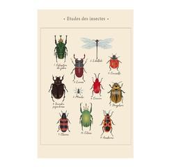 Achat en ligne Affiche insectes k.marlier 40x50cm