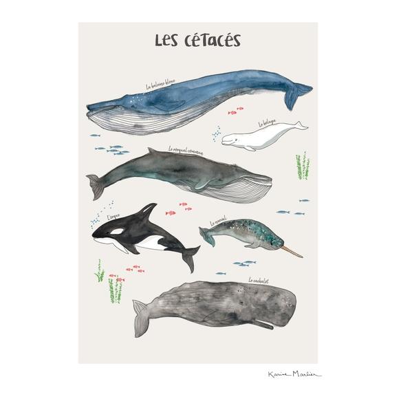 Achat en ligne Affiche les cétacés k.marlier 50x70cm