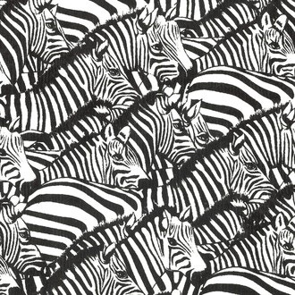 Foglio di carta zebra 50x70cm 100g