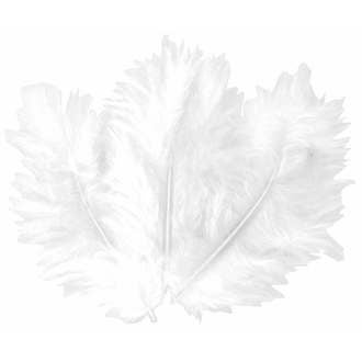 Indispensables - 50 plumes blanches 10cm