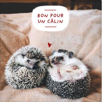 PICKMOTION - Carte Bon Pour Un Calin 12cm