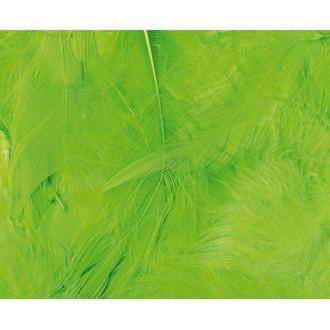 ARTEMIO - Set de 20 plumes duvetées vertes en pot 3 g