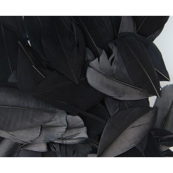 Achat en ligne Set de 20 plumes rondes noires en pot 3g