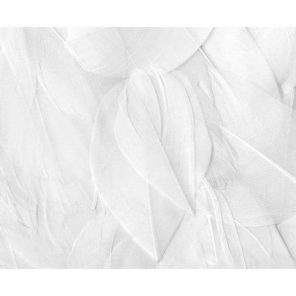 Set de 20 plumes rondes blanches en pot 3g