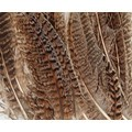 Set de 24 plumes lissées naturelles en pot 3 g