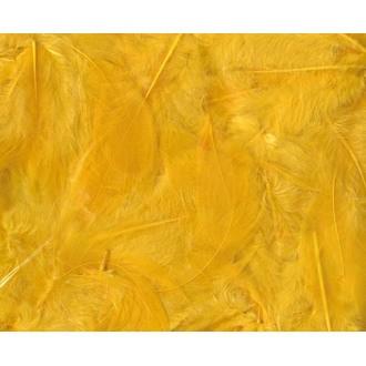 ARTEMIO - Set de 20 plumes duvetées jaunes en pot 3 g