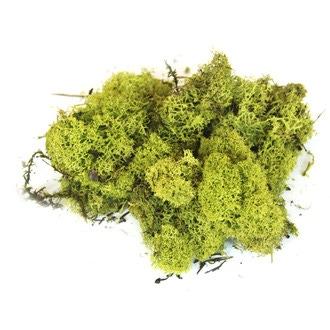 Mousse d'Islande décorative vert citron 50g
