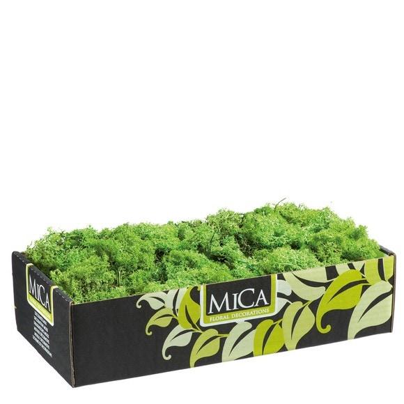 Achat en ligne Lichen Mica stabilisé vert pour composition végétale 500g