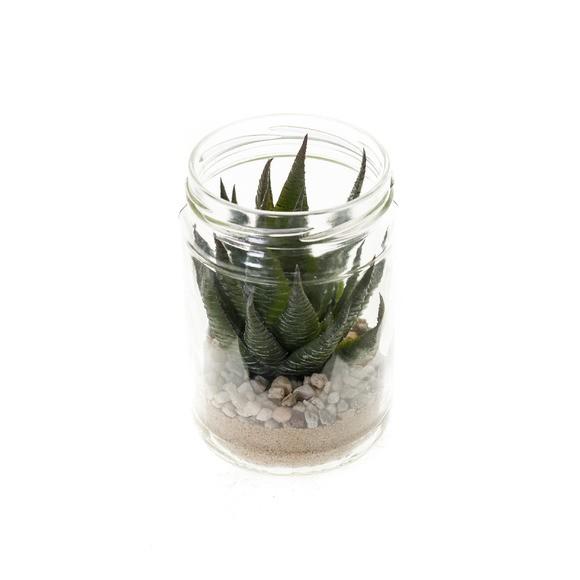 Achat en ligne Succulente en pot verre 8,2x12,7cm